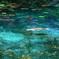 名も無き池(モネの池Ⅱ)