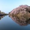 桜 彦根城Ⅱ