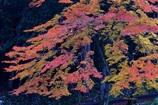 晩秋の錦絵