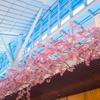 【きれいだけどね・・・】桜満開!【人工】