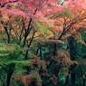 錦の森へようこそ