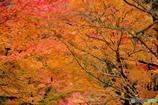 秋・もえる