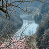 早春の渓谷