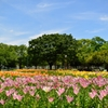 初夏の花園