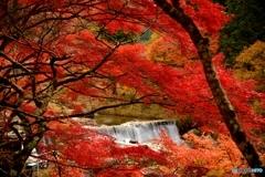 燃え盛る秋