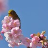 春が来たぞぉ~
