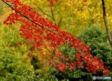 ひとすじの秋