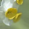 spring a chorus