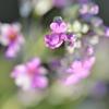 春かなぁ (-。-)y-゜゜゜