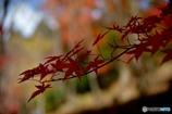 秋の日差しの中で