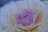 新春の花飾り