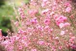 ピンクでいっぱい