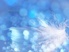 天使の目覚め