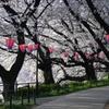 春の権現堂4