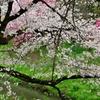 春の隼人堀川5