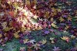 花田苑の落葉3