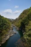 新緑の高津戸峡