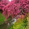 春の隼人堀川3