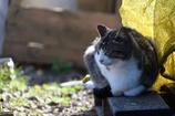ごはんを待つ猫たち2