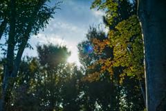 秋、近くに。