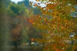 窓越しの秋