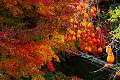 秋のツートップ