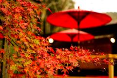 紅い葉、赤い傘。