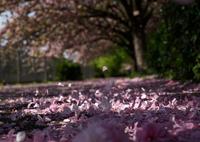 SONY ILCE-7Sで撮影した(ざわめく)の写真(画像)