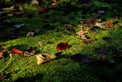 苔布団に落ちた枯れ葉たち