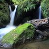 苔生す岩と流木