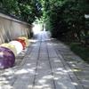 建仁寺・和傘の競演