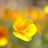 希望の黄色