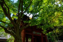 2013-4 鎌倉にて