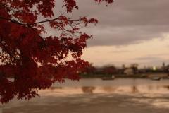 秋の嵯峨 広沢池