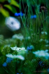 初夏のお庭から•*¨*•.¸¸♬ no.♡♡♡