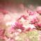秋桜の色香に誘われて…♡