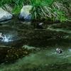 カモandカモ... 秋さがしの旅 ♡京都 no.5