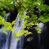 鱒見の滝で2