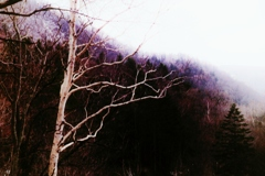 白い木魂・・・