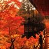 談山神社の紅葉② ~Contrast~