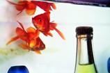 金魚 in お酒の自動販売機