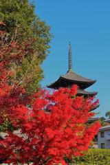 興福寺五重塔 ~紅葉の向こう側~