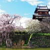 郡山城跡の桜 ~しだれ桜②~