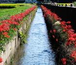 用水堀と彼岸花