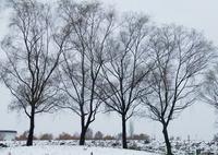 SIGMA sd Quattro Hで撮影した(小雪の福島潟)の写真(画像)
