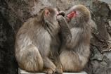 上野動物園ー4