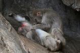 上野動物園ー3