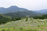 田園風景 - 丸山千枚田2
