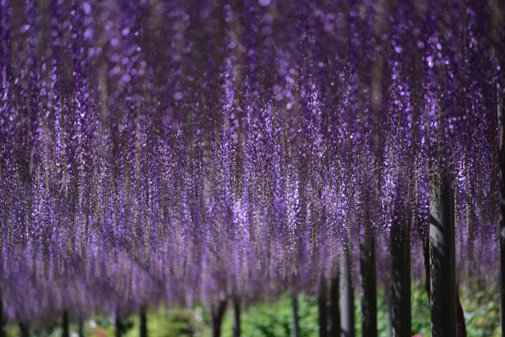 紫色の世界