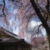 懐かしの京都の春2